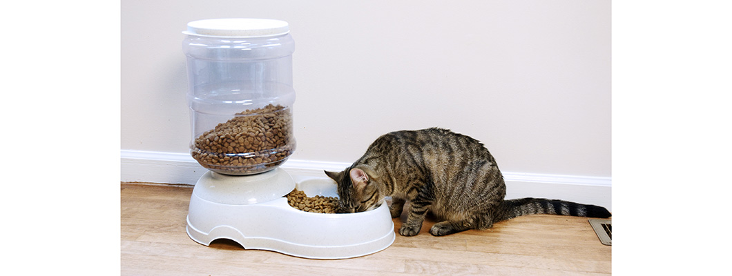 fountains pet for timed and cats more dogs feeders feedings cat feeder automatic best gempet min food the