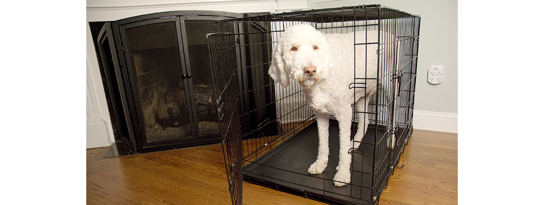 Foldable double door dog cat training crate with divider for Double door with dog door