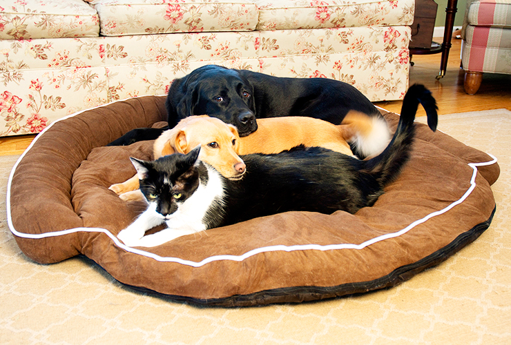 Bolster Pet Beds Are Perfect For Any Size Dog As They Provide Ultimate Comfort Security And A Cozy Spot Your To Sleep